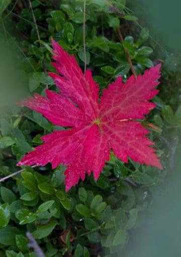 Inbjudan till minnesgudstjänst - Rött löv
